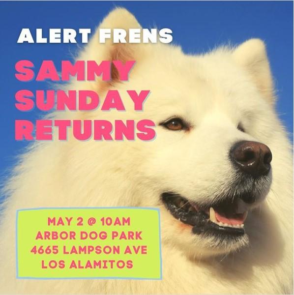 Sammy Sunday